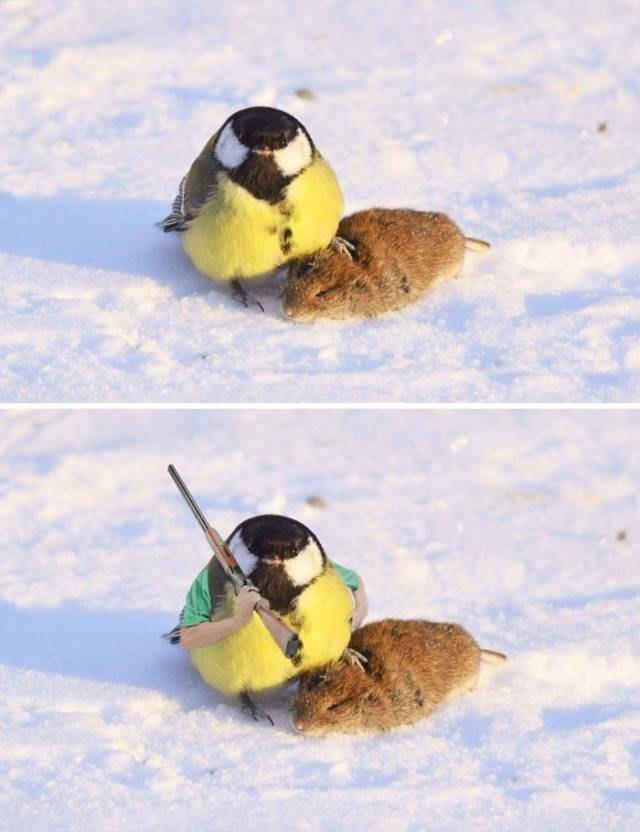 Bird - ा