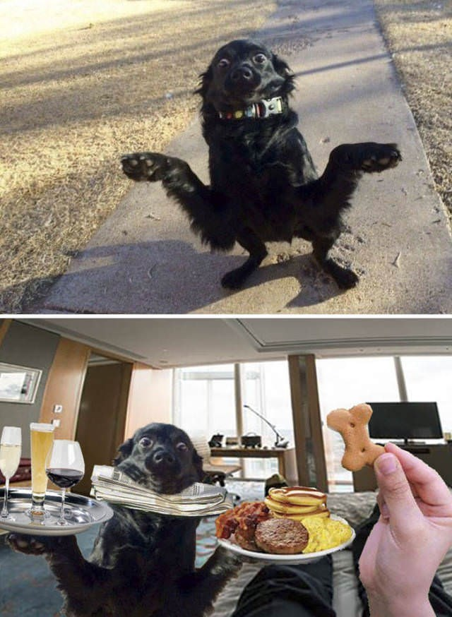 Cheezburger Image 9118942720