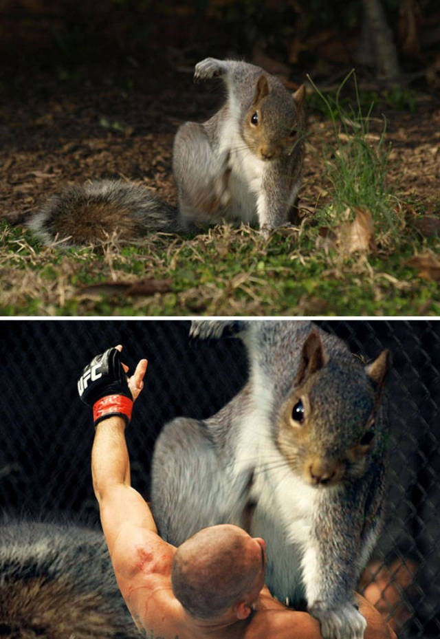 animal photoshop - Squirrel