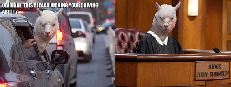 animal photoshop - Fictional character - ORIGINAL THIS ALPACA JUDGING YOUR DRIVING ABILITY JUDGE JUDY SHEINDLIN