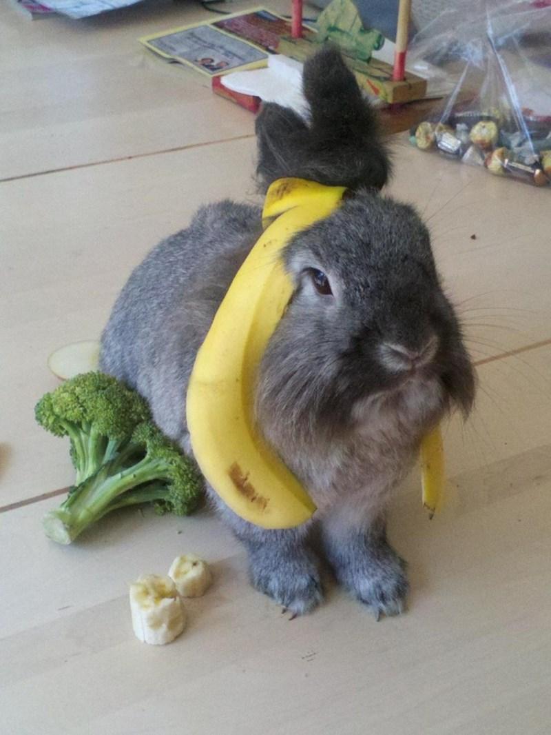 Domestic rabbit - vek