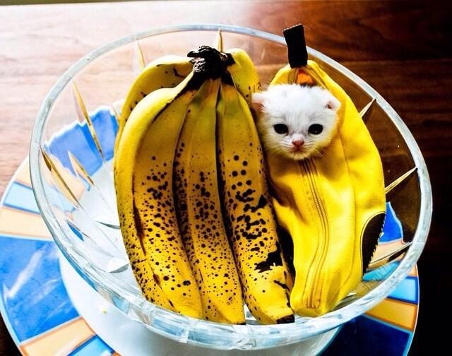 Banana family