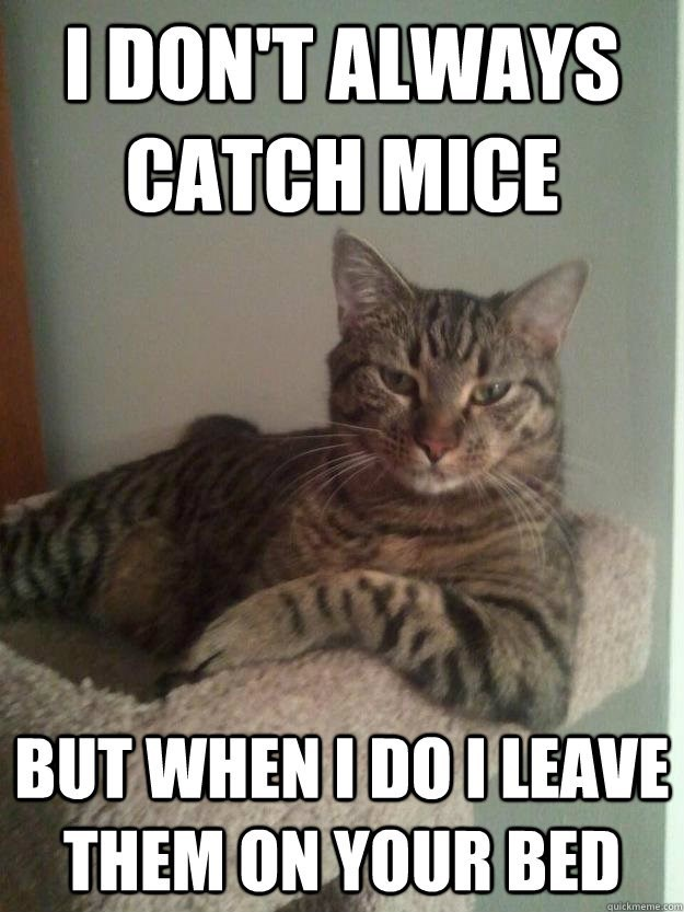 Cat - IDON'T ALWAYS CATCH MICE BUT WHEN I DOILEAVE THEM ON YOUR BED quickmemecom