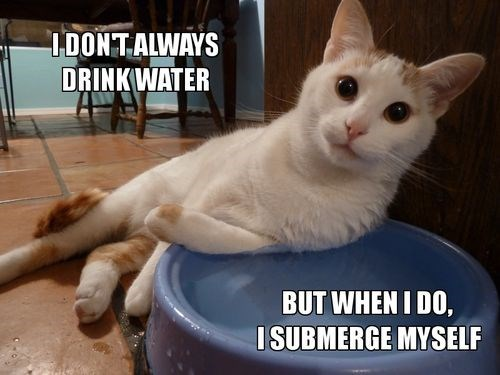 Cat - 1DONTALWAYS DRINKWATER BUT WHEN I DO, ISUBMERGE MYSELF