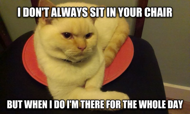 Cat - IDON'TALWAYS SIT IN YOUR CHAIR BUT WHEN I DOI'M THERE FOR THE WHOLE DAY