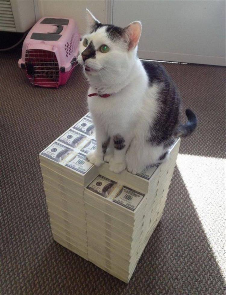 Cat - ASSE