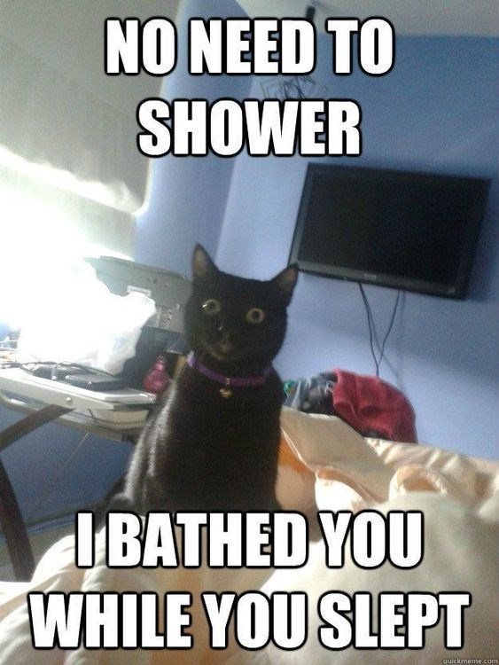 Cat - NONEED TO SHOWER IBATHED YOU WHILE YOU SLEPT quickmeme.coms