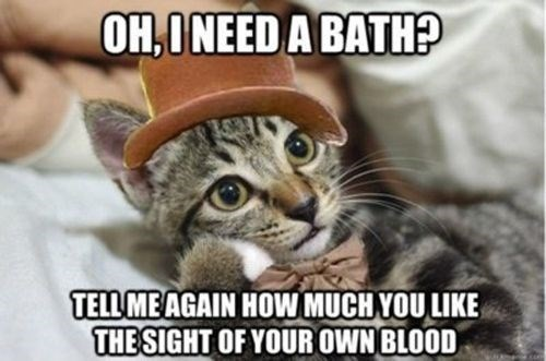 Cat - OH,ONEED A BATH? TELL MEAGAIN HOW MUCH YOU LIKE THESIGHT OF YOUR OWN BLOOD