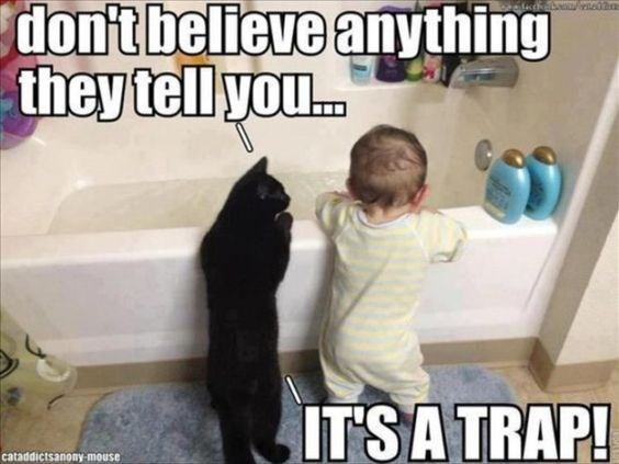 Photo caption - don't believe anything they tell you... Saaened ITSA TRAP! cataddictsanony-mouse