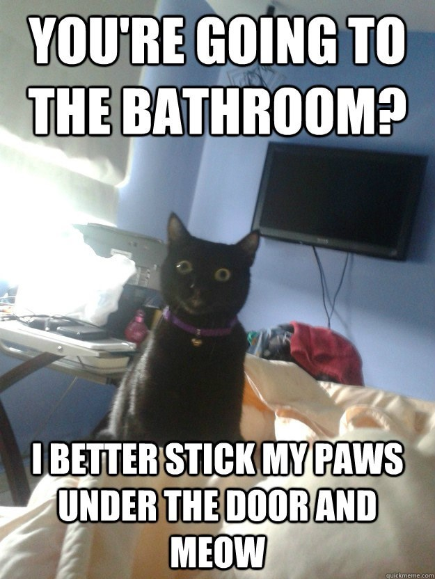 Internet meme - YOU'RE GOING TO THE BATHROOM? IBETTER STICK MY PAWS UNDER THE DOORAND MEOW quickmeme.com