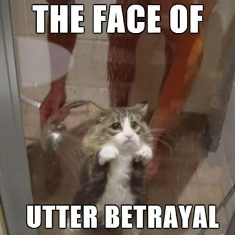 Cat - THE FACE OF UTTER BETRAYAL