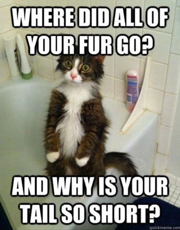 Photo caption - WHERE DIDALLOF YOUR FUR GO? AND WHY IS YOUR TAIL SO SHORT? quickmeme.com