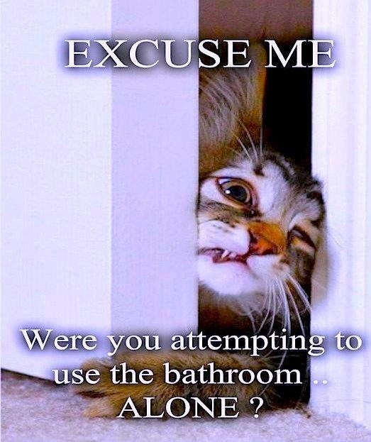 Text - EXCUSE ME Were you attempting to use the bathroom ALONE ?