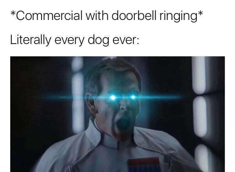 meme - Text - *Commercial with doorbell ringing* Literally every dog ever: