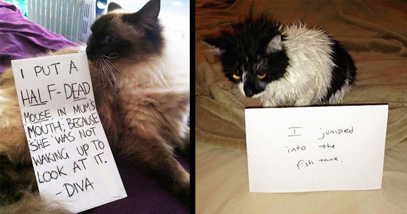 Funny pictures of cats being shamed for doing stupid things