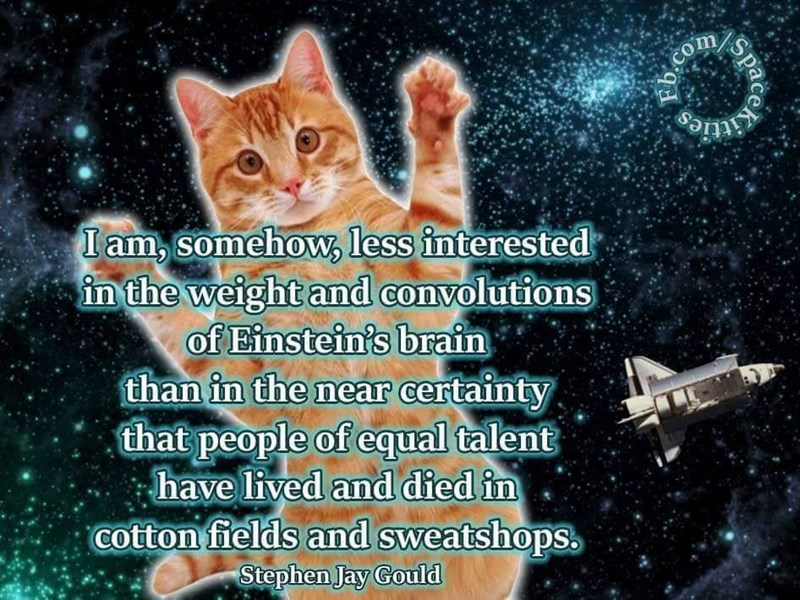 Cat - COm itties I am, somehow, less interested in the weight and convolutions of Einstein's brain than in the near certainty that people of equal talent have lived and died in cotton fields and sweatshops Stephen Jay Gould Space b.