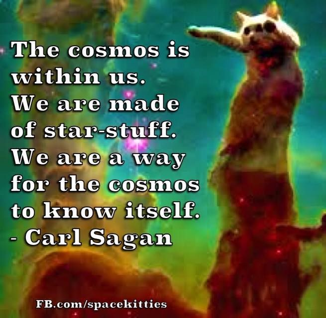 Meerkat - The cosmos is within us. We are made of star-stuff. We are a way for the cOsmos to know itself. Carl Sagan FB.com/spacekitties