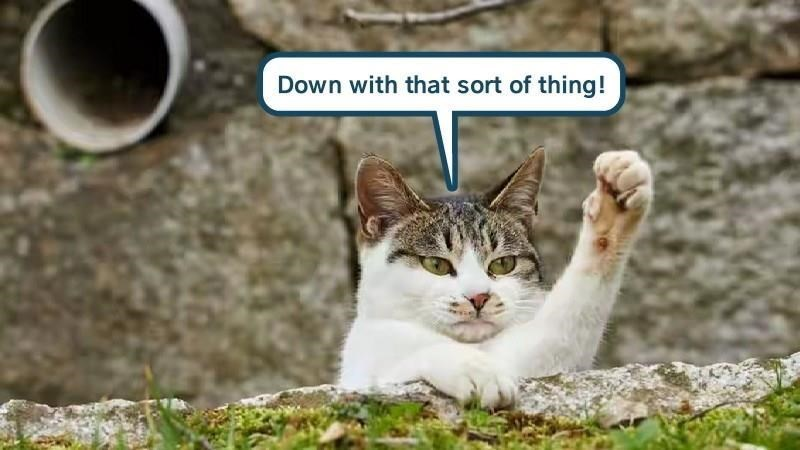 meme - Cat - Down with that sort of thing!