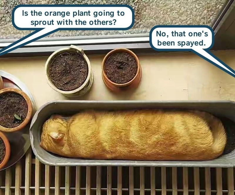meme - Food - Is the orange plant going to sprout with the others? No, that one's been spayed.