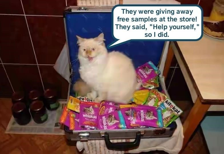 "meme - Cat - They were giving away free samples at the store! They said, ""Help yourself,"" so I did. kitekat iteka whiskas whiskas whiskas whiskas"