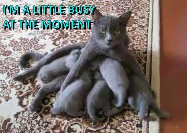 meme - Cat - MALTTLE BUSY AT THE MOMENT