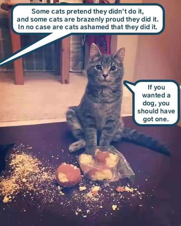meme - Cat - Some cats pretend they didn't do it, and some cats are brazenly proud they did it. In no case are cats ashamed that they did it. If you wanted a dog, you should have got one