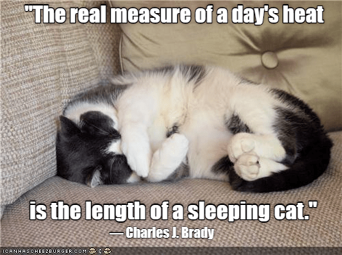 "meme - Cat - ""The real measure of a day's heat is the length of asleeping cat."" Charles J. Brady ICANHASCHEE2EURGER cOM"