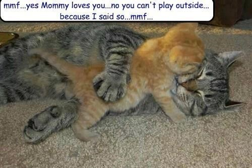 meme - Cat - mmf...yes Mommy loves you...no you can't play outside... because I said so...mmf...