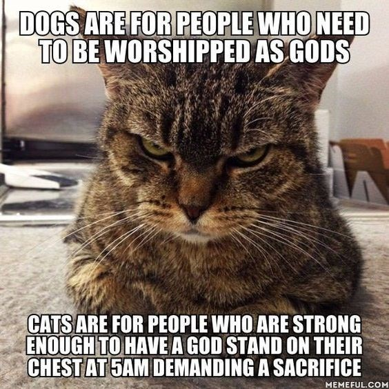 Cat - DOGS ARE FOR PEOPLE WHO NEED TO BE WORSHIPPED AS GODS CATSARE FOR PEOPLE WHO ARE STRONG ENOUGH TO HAVE A GOD STAND ON THEIR CHEST AT 5AM DEMANDING A SACRIFICE MEMEFUL.COM