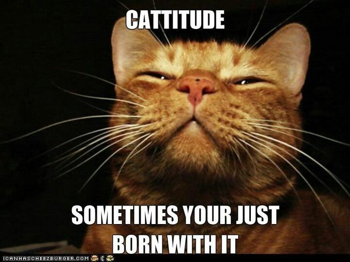 Cat - CATTITUDE SOMETIMES YOUR JUST BORN WITH IT OHNHRSCHEERBUsGER.COM