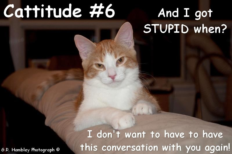 Cat - Cattitude #6 And I got STUPID when? I don't want to have to have this conversation with you again! G.R. Hambley Photograph