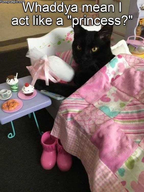 "Cat - Funnycatpix.com Whaddya mean I act like a ""princess?"""