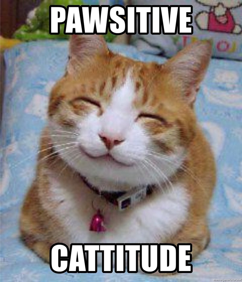 Cat - PAWSITIVE CATTITUDE memegenerator.net
