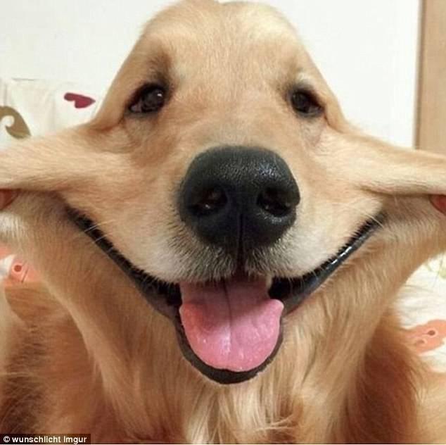 Dog - wunschlicht Imgur