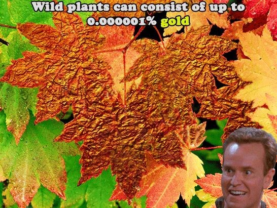 cool statistics that wild plants can have some gold in them