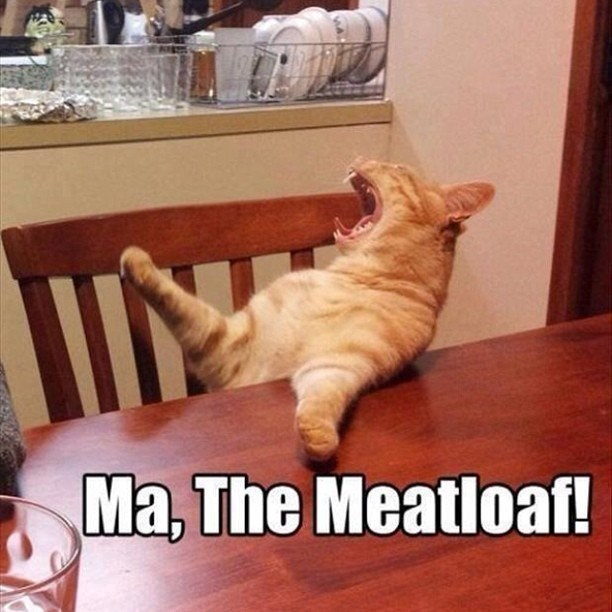 caturday - Cat - Ma, The Meatloaf!