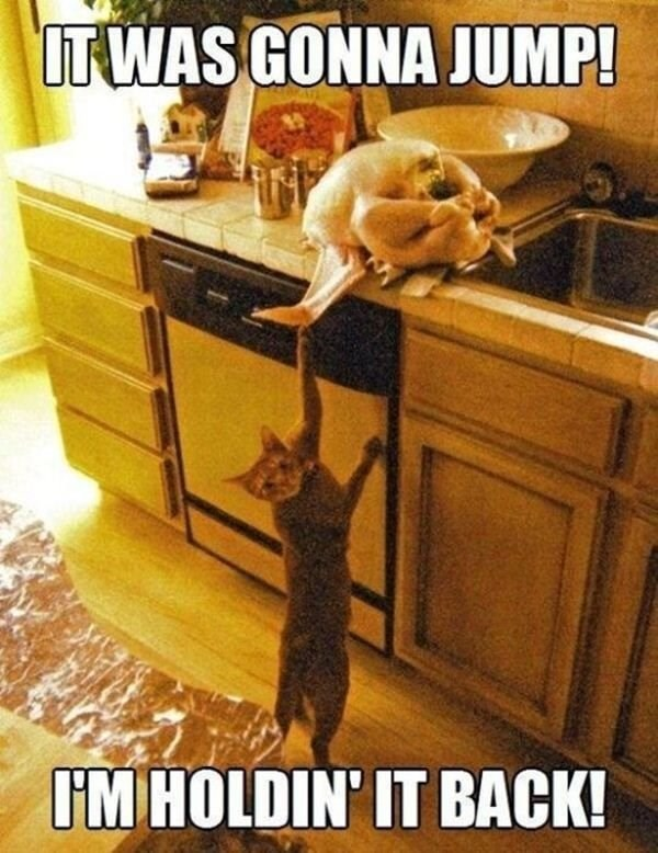 caturday - Cat - UTWAS GONNA JUMP! IM HOLDIN' IT BACK!