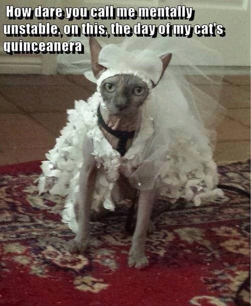 caturday - Dog - How dare you callme mentally unstable, on this the day of my catts quinceanera