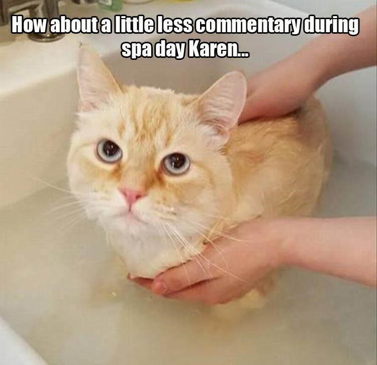 caturday - Cat - Howabout a little less commentaryduring spaday Kare.c.