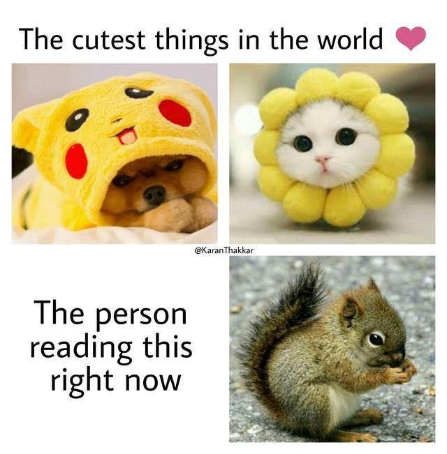Yellow - The cutest things in the world @KaranThakkar The person reading this right now