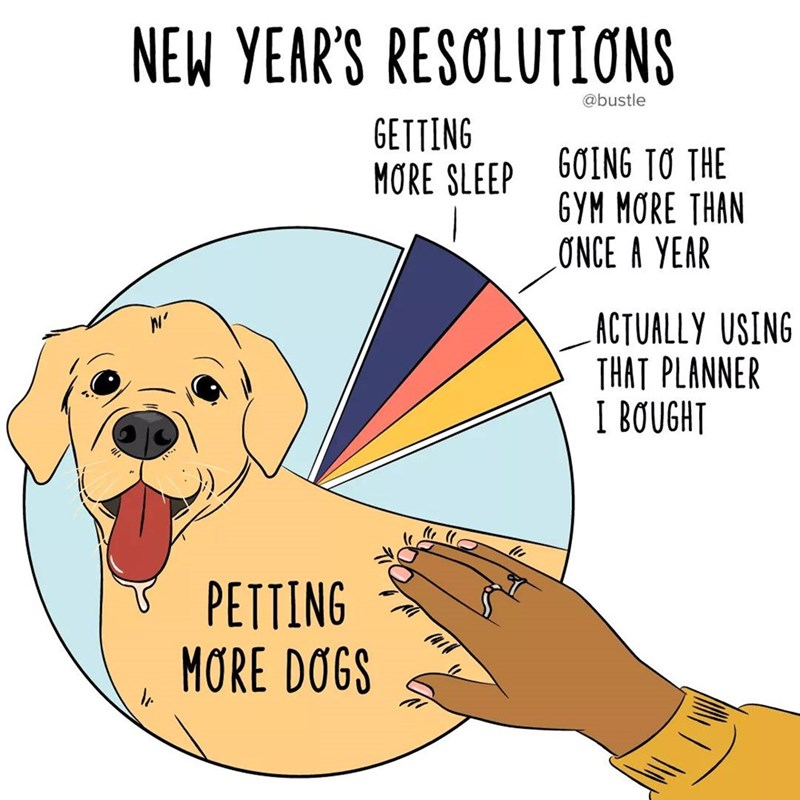 Dog - NEW YEAR'S RESOLUTIONS @bustle GETTING MORE SLEEP 60ING TO THE GYM MORE THAN ONCE A YEAR ACTUALLY USING THAT PLANNER I BOUGHT PETTING MORE DOGS