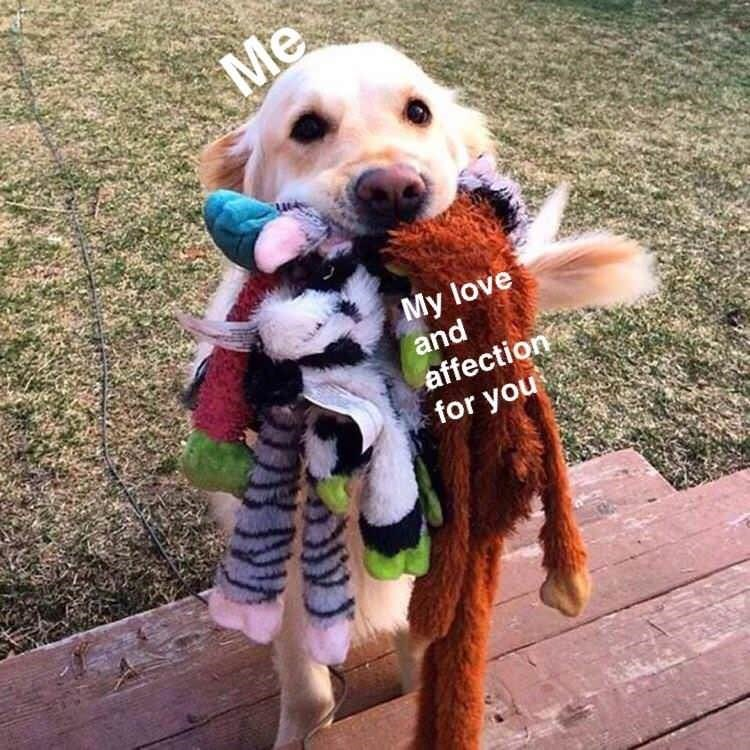 Dog - Me My love and affection for you