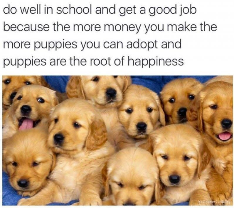 Dog - do well in school and get a good job because the more money you make the more puppies you can adopt and puppies are the root of happiness