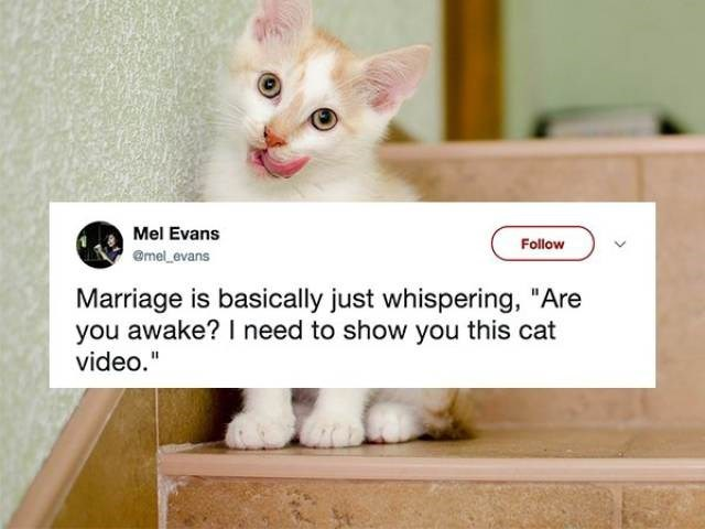 "Cat - Mel Evans Follow @mel evans Marriage is basically just whispering, ""A you awake? I need to show you this cat video."""