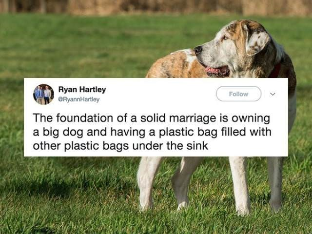 Dog - Ryan Hartley Follow RyannHartley The foundation of a solid marriage is owning a big dog and having a plastic bag filled with other plastic bags under the sink