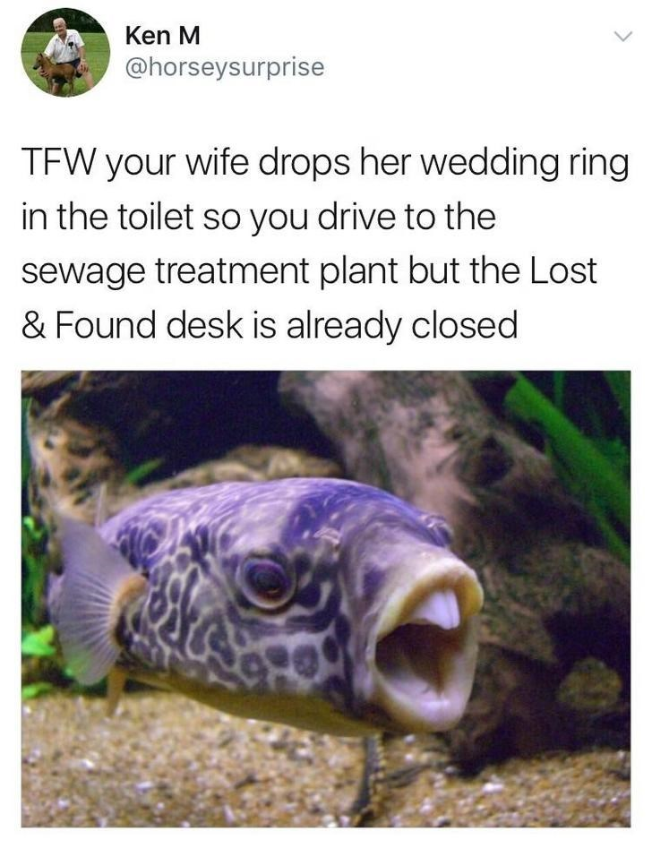 Organism - Ken M @horseysurprise TFW your wife drops her wedding ring in the toilet so you drive to the sewage treatment plant but the Lost & Found desk is already closed