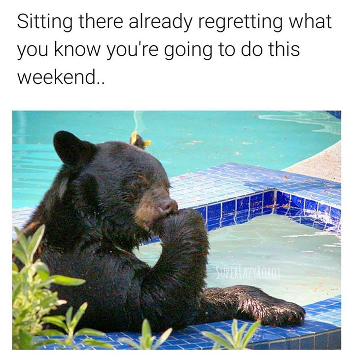 animal memes - Vertebrate - Sitting there already regretting what you know you're going to do this weeken. SPERLAZYROBOT