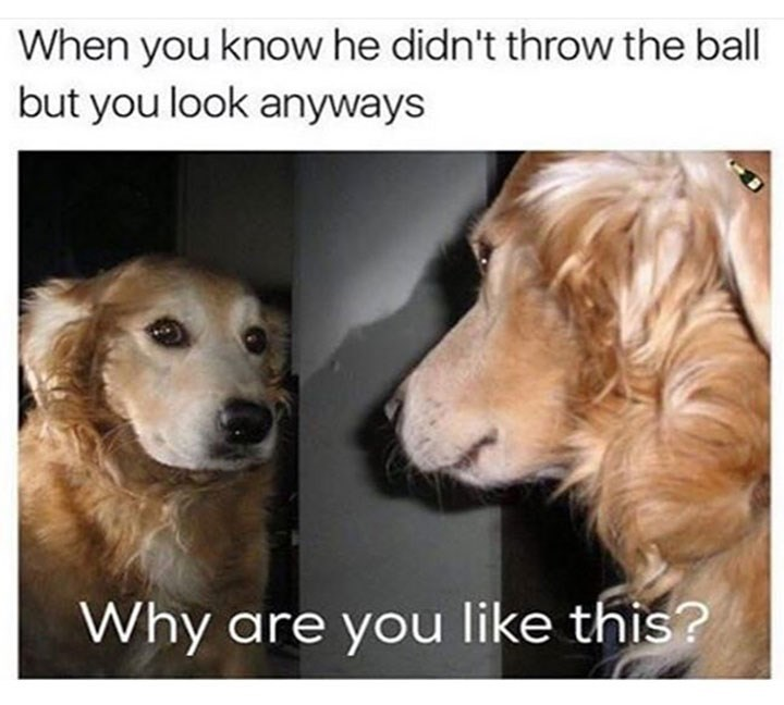 meme - Dog - When you know he didn't throw the ball but you look anyways Why are you like this?