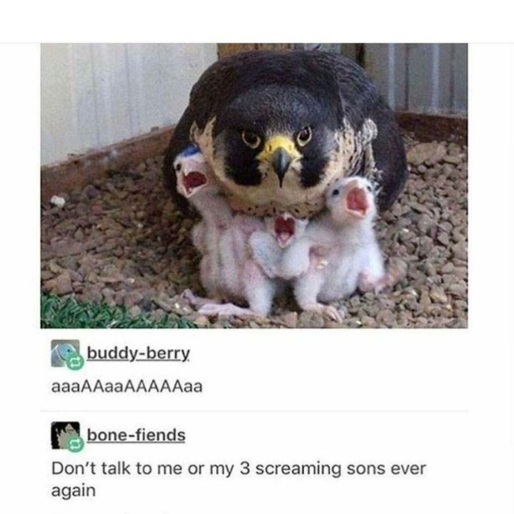 meme - Photo caption - buddy-berry aaaAAaaAAAAAaa bone-fiends Don't talk to me or my 3 screaming sons ever again