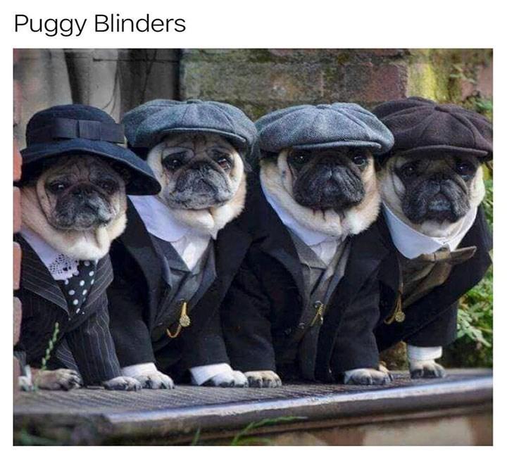 meme - Pug - Puggy Blinders